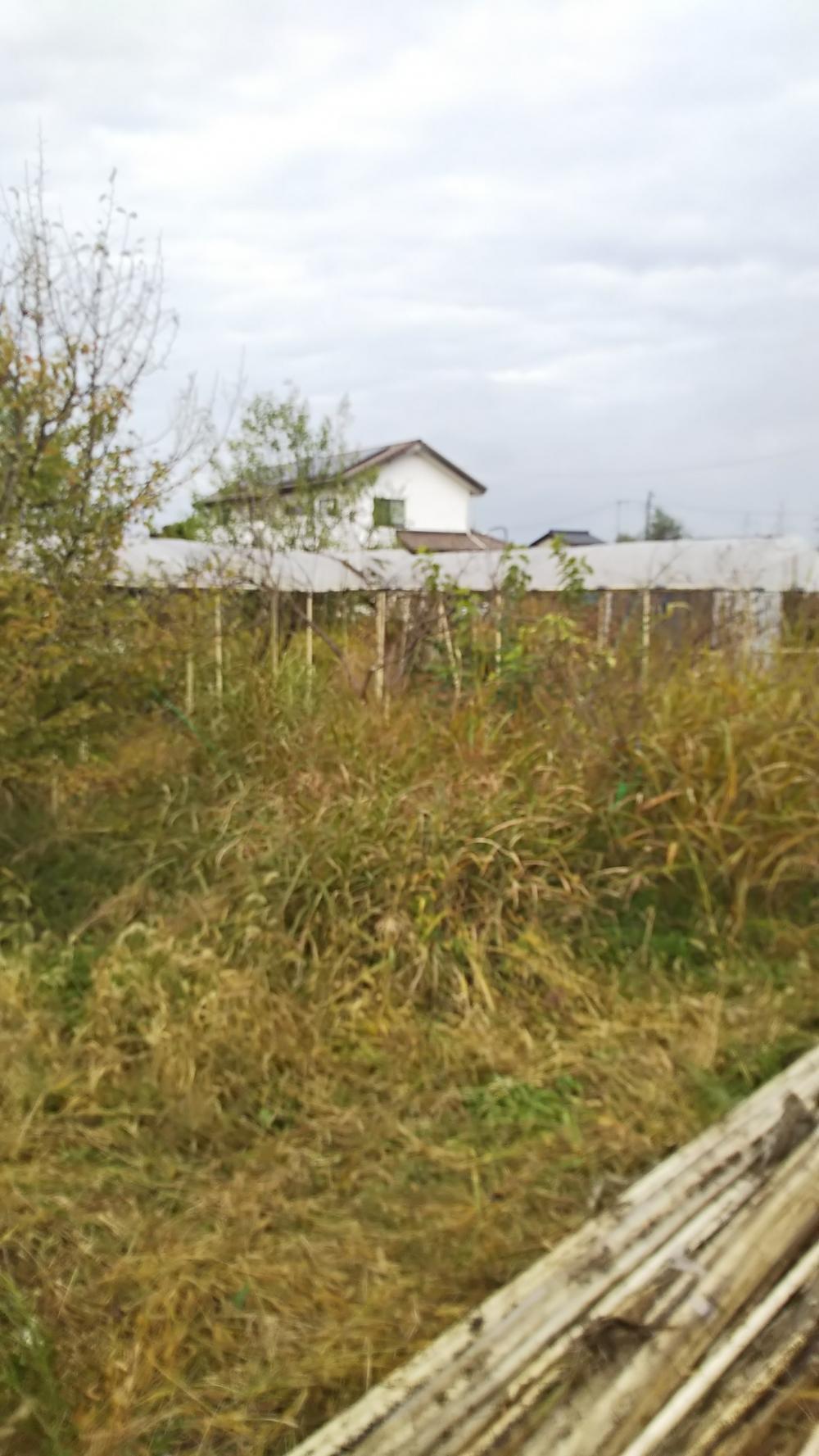 草刈り、鉄棒ハウス解体作業 やくだち隊