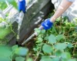 草刈り・伐採